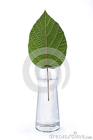 Sheet in a vase