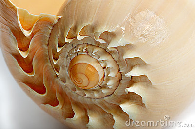 Shell - 2