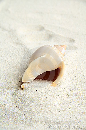 Shell on beach sand