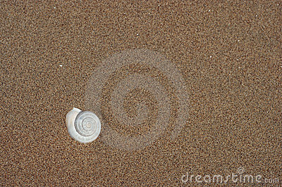 Shell in the beach sand