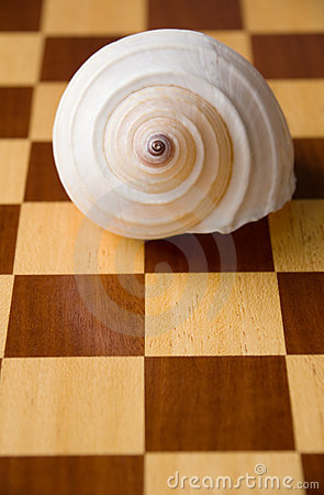 Shell on Chess Board