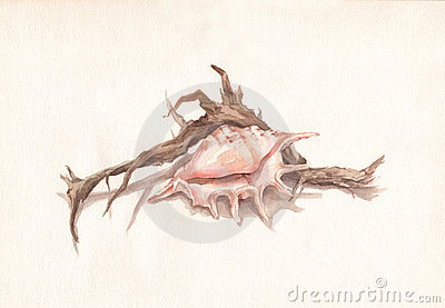 Shell and dry root watercolor painting