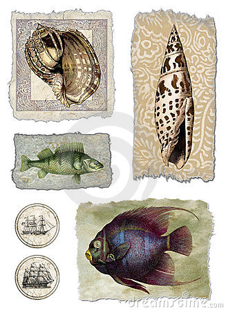 Shell & Fish Collage