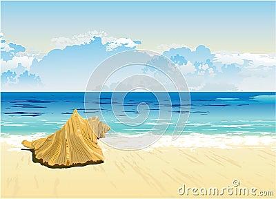 Shell on the horizon