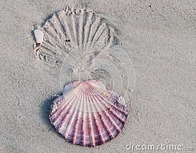 Shell imprint.