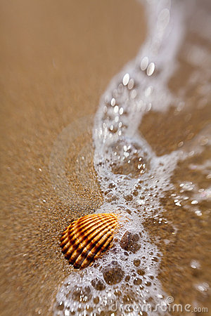 Free Shell In The Sand Royalty Free Stock Photography - 14943397