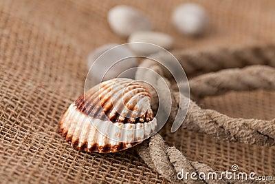 Shell laing on jute