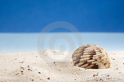 Shell lying on sand at beach