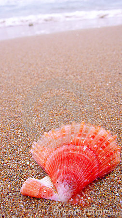 Free Shell On Beach Royalty Free Stock Image - 14026496