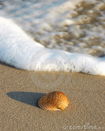 Free Shell On Beach Stock Images - 311394