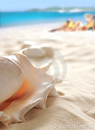 Free Shell On Beach Stock Photo - 5038690