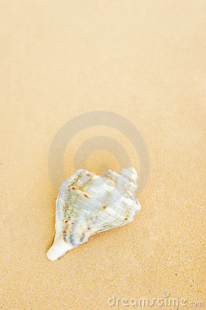 Free Shell On The Beach Stock Photography - 5881562