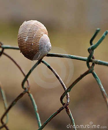 Free Shell On The Fence Stock Images - 13571934