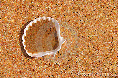 Shell on orange beachsand