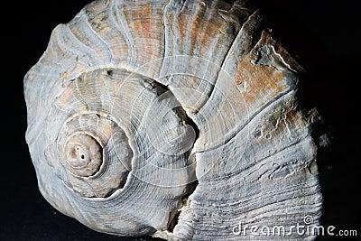 Shell pattern