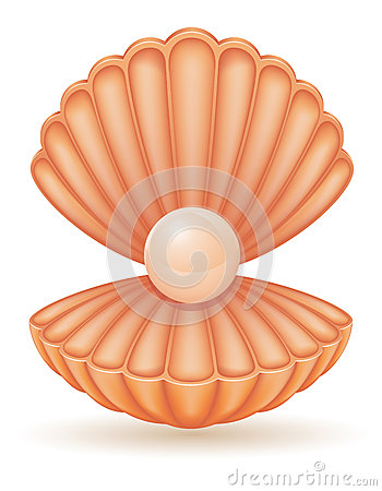 Shell With Pearl Vector Illustration Stock Vector - Image ...