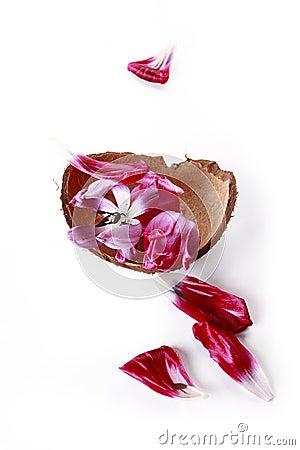 Shell and petals