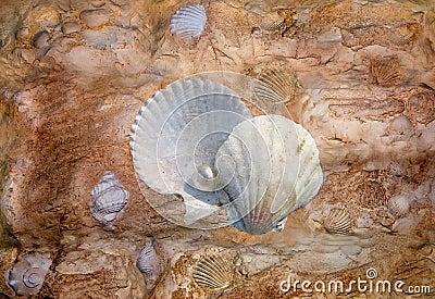 Shell rock
