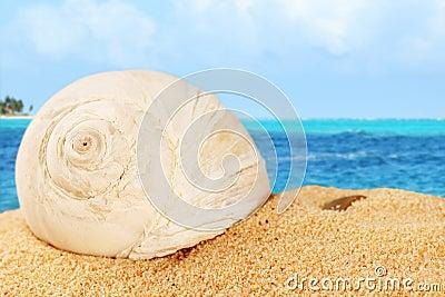 Shell on sand od the Caribbean