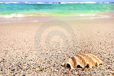 Shell and sea