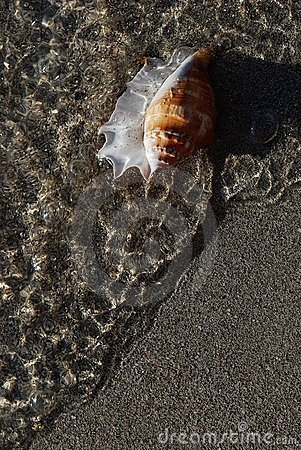 Shell on the shore
