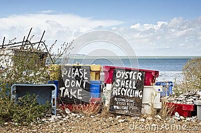 Shell van de oester Recycling