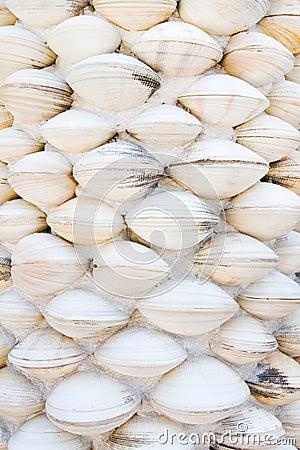 Free Shell Wall Stock Photography - 17802912