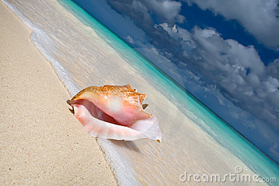Shell on a white sand beach near blue see