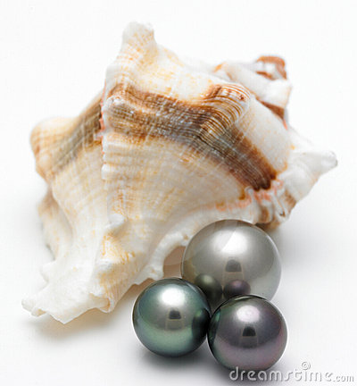 Free Shell With Black Pearls Stock Photo - 5173860