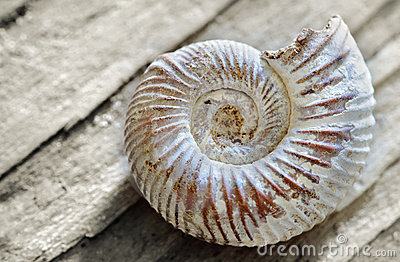 Shell on wood