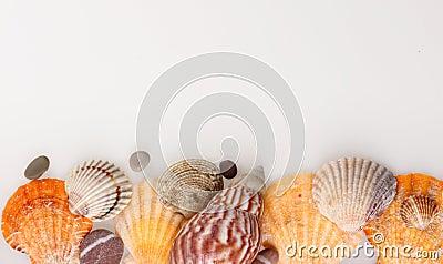 Shelles