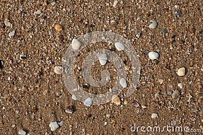 Shellfish on sand