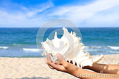 Shellfish and sea