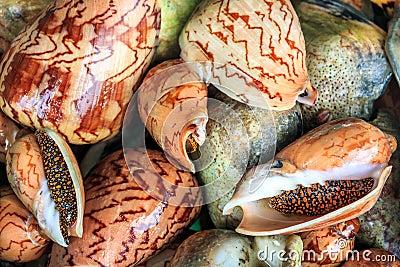 Shellfish Store