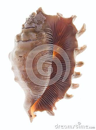 Shellfish on white