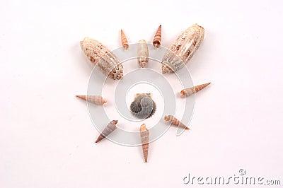 Shellmuster