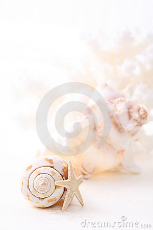 Free Shells Stock Image - 13315391