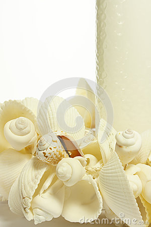 Shells Royalty Free Stock Photos - Image: 26292388