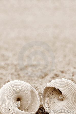 Free Shells Stock Photography - 2737642