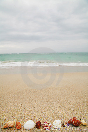Free Shells Stock Photo - 568660