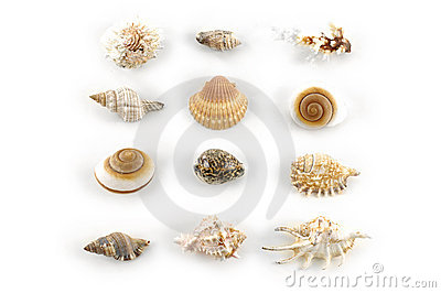 Shells Stock Photos - Image: 6090923