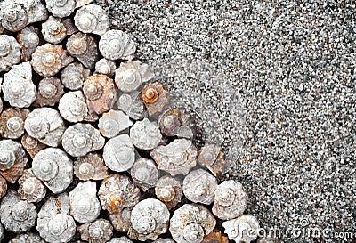 Shells Background