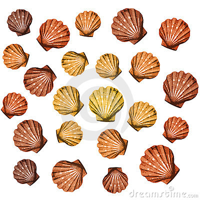 Shells background (vector)
