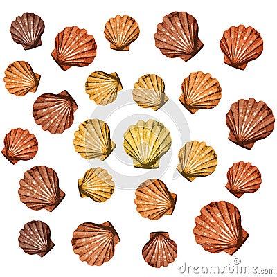 Shells background (vector)