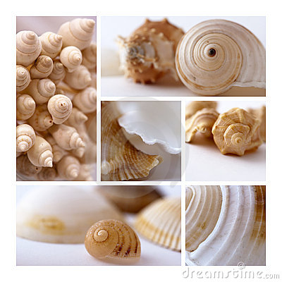 Free Shells Collage Stock Photos - 16618613