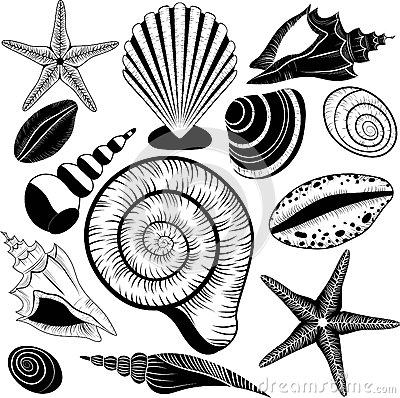 Free Shells Collection. Vector Set With Seashells And Starfish Stock Photos - 33164873