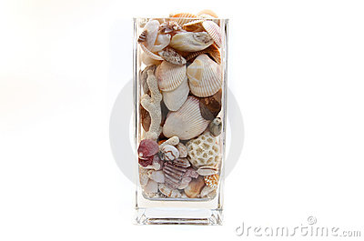 Shells and coral in a vase