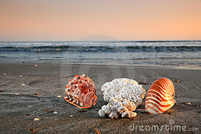 Shells and corals on a beach