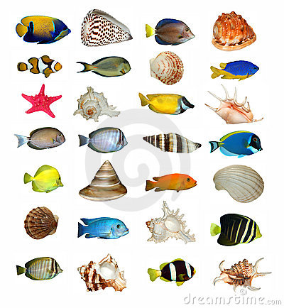 Shells and fish isolated