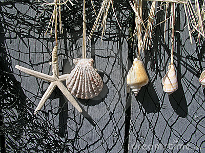 Shells hanging on a fence